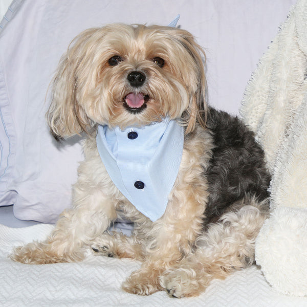 button down blue cotton dog scarf