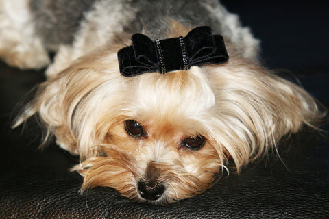 crystal embellished hair bow for dogs