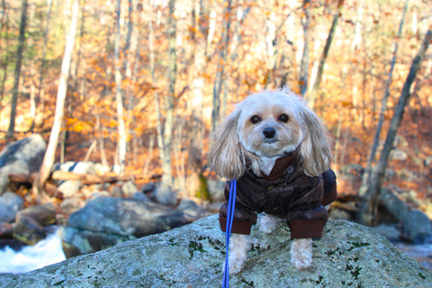 Dog Friendly hiking trail New York