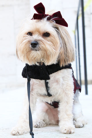 puppy couture velvet bow jacket
