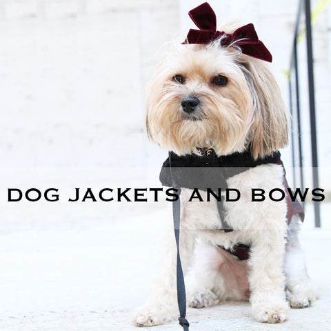 kate stoltz cute dog jackets and bows