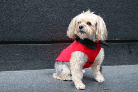 red cashmere dog coat made in nyc