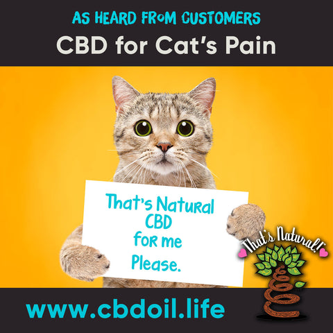 CBD for cats, CBD for cat's pain, CBD for pets, best-rated CBD for pets - family-owned CBD company, legal hemp CBD, hemp legal in all 50 States, hemp-derived CBD, Thats Natural topical CBD products, CBDA, CBDA Oil, Life Force with biodynamic Colorado hemp - That's Natural CBD Oil from hemp - whole plant full spectrum cannabinoids and terpenes legal in all 50 States - www.cbdoil.life, cbdoil.life, www.thatsnatural.info, thatsnatural.info, CBD oil testimonials, hear from customers of CBD oil products