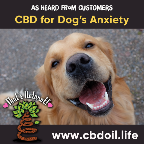 hemp-derived CBD, legal in all 50 States - legal hemp CBD, Entourage Effect ,That's Natural CBD for pets, CBD for dogs, CBD for animals, CBD for cats, legal CBD for pets. CBD for pet anxiety, CBD for pet pain, full spectrum Thats Natural CBD, CBD, CBDA, CBC, CBG, CBN, CBD oil for pets at www.cbdoil.life, cbdoil.life, thatsnatural.info, can you use CBD for pets?