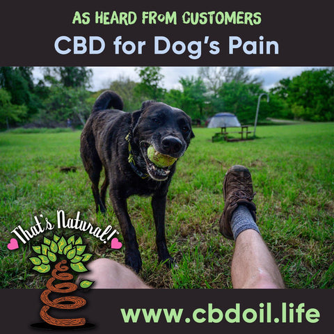 Best-Rated CBD for pets - hemp-derived CBD, legal in all 50 States, That's Natural CBD for internal use - legal hemp CBD Entourage Effect - CBD Oil Drops (250mg CBD per 1 oz. Bottle) - Our most simple product containing our proprietary CBD-rich hemp oil, organic grape seed oil, and organic hemp seed oil. This is the product that can also be taken internally, or applied topically! Find online at www.cbdoill.life, www.cbdoil.life, thatsnatural.info, www.thatsnatural.info and at Thats Natural Life Force Market!  CBD from hemp from Thats Natural, CBD for Pets  https://cbdoil.life/products/unflavored-cbd-tincture-for-pets-250mg