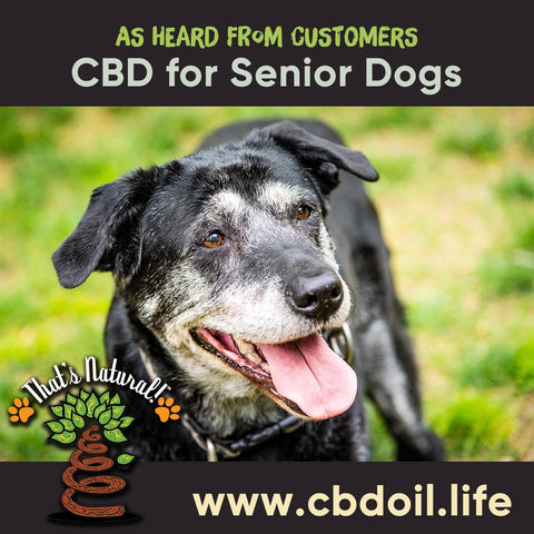 CBD for dogs, CBD for pets, Another example of a happy pet owner is a customer with two 20-year old dogs (that's 140 years in human years!). They struggled with arthritis and they found it harder to do most things like getting around to be with their owner or making it out to handle their business.  After trying our That's Natural Pet CBD Hemp oil they are walking around with no problem - the owner was so grateful to see her dogs feel better with less pain and have a pep in there step!