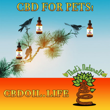 best CBD for pets, best-rated CBD for pets, most trusted CBD for pets - Entourage Effect - That's Natural full spectrum CBD oil products with cannabinoids and terpenes - experience the entourage effect with Thats Natural CBD Oil, legal hemp CBD, hemp legal in all 50 States, CBD, CBDA, CBC, CBG, CBN, Cannabidiol, Cannabidiolic Acid, Cannabichromene, Cannabigerol, Cannabinol; beta-myrcene, linalool, d-limonene, alpha-pinene, humulene, beta-caryophyllene - find at cbdoil.life and www.cbdoil.life