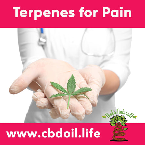 terpenes for pain, terpene profile, terpenoids - hemp-derived CBD, legal hemp CBD, The That's Natural terpene profile includes: beta-myrcene, linalool, d-limonene, alpha-pinene, humulene, beta-caryophyllene - more from Thats Natural at www.cbdoil.life, cbdoil.life, and www.thatsnatural.info and find us an our Life Force Market outside of Basalt, Colorado in the Aspen Valley next to the Willits Gas Station CBD Distillery, best-rated CBD, Alex Jones, Glenn Beck, CW Botanicals #ThatsNatural #lifeforce #cbd #cbdoil