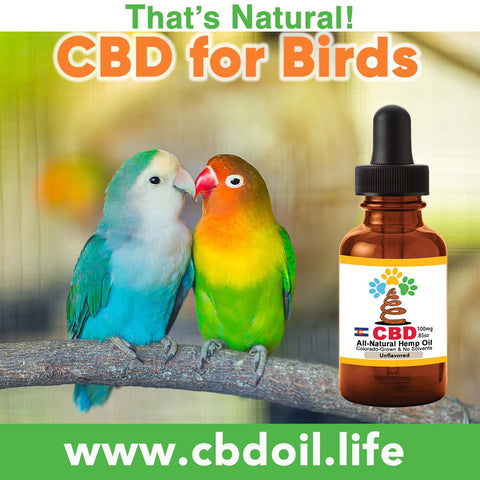 CBD for birds, birds, Endocannabinoid System, Can birds have CBD, Cannabidiol, That's Natural, Thats Natural, www.cbdoil.life, cbdoil.life, thatsnatural.info, www.thatsnatural.info, CBD Oil, full spectrum, entourage effect, Life Force Market, Basalt Colorado, Willits Town Center