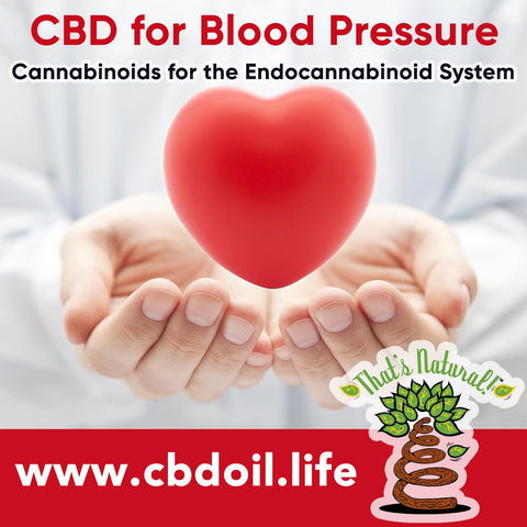 Can CBD help with blood pressure and hypertension?  Research is showing that CBD (Cannabidiol) may help with both through the Endocannabinoid System.  See more at www.cbdoil.life and @cbdhempoil  #bloodpressure #hypertension #hearthealth #heartattack #anxietyattack #panicattack #holistic #health #natural #remedies #heart