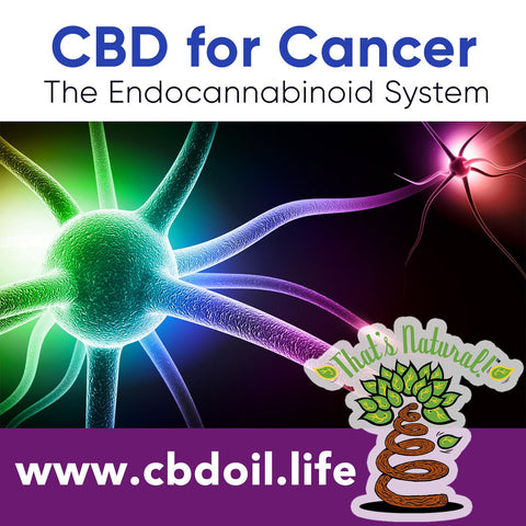 Cannabinoids like CBD may have anti-tumor properties and help with cancer treatments - See more research and news at cbdoil.life