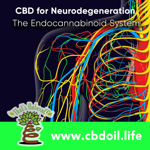 Cannabinoids like CBD may help prevent and slow #neurodegeneration through the body's Endocannabinoid System!  Protect your nervous system and immune system!  See morefrom That's Natural Premium CBD-Rich Hemp Oil Products at www.cbdoil.life and @cbdhempoil  #inflammation #fibro #PTSD #wellness #holistichealing #natural #immunity #immunityboost #fibrowarrior #arthritis
