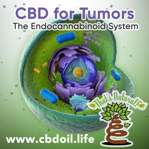 "Cannabidiol or CBD has been shown to slow the growth of breast cancer tumors.  Non-Psychotropic (will not get you ""high"") CBD has many anti-inflammatory and neuroprotective properties that can potential improve people's quality of life and overall #health and #wellness.   See more at www.cbdoil.life and @cbdhempoil #breastcancer #cancer #anticancer #inflammation #immunity #immunebooster #immunesupport #cancersucks #womenshealth #wellness #holistic #wellnesswarrior #natural #homeopathic #women #womenpower"