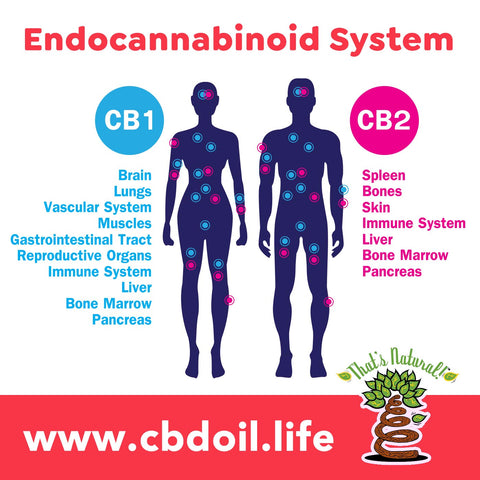 Endocannabinoid System for immunity, CBD for immunity, CBD for coronavirus, CBD for COVID19, CBD for COVID-19 - Entourage Effect from That's Natural CBD Oil - full spectrum cannabinoids and terpenes from Colorado hemp - legal in all 50 States - Supercritical CO2 extraction, Pure, Potent, Trusted at cbdoil.life and www.cbdoil.life - Thats Natural topical CBD products, CBD muscle jelly, CBD face lotion, CBD face creme, CBD body lotion, CBD salve, CBD lube - legal hemp CBD at thatsnatural.info