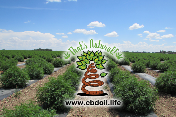 That's Natural CBD Oil - Fields of Hemp in Colorado