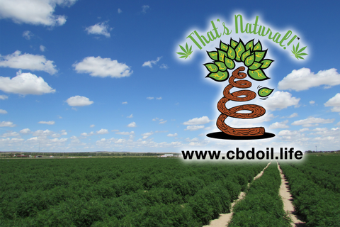 That's Natural Hemp Fields in Colorado - CBD products at cbdoil.life
