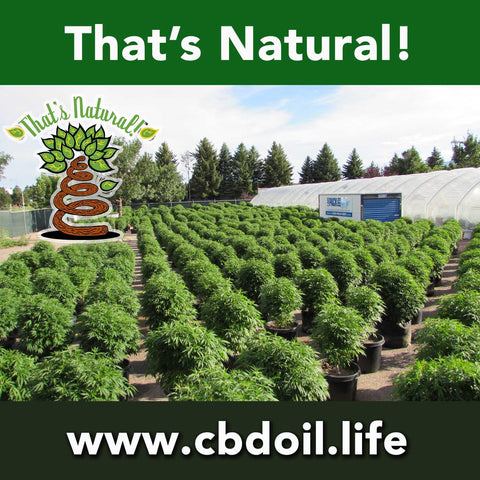 Thats Natural CBD Oil - Hemp in Colorado Greenhouses
