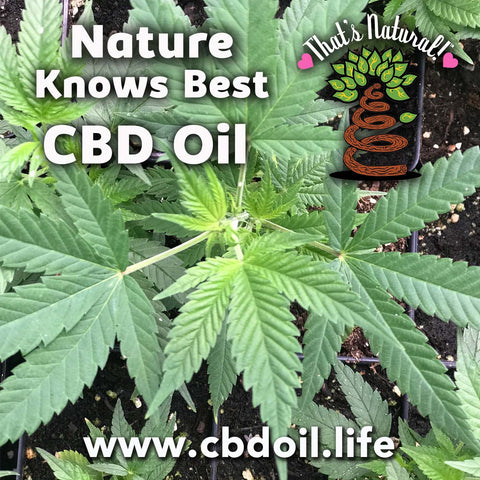 CBD Isolate versus Full Spectrum CBD product - what is better CBD, isolate versus oil, CBD isolate versus CBD oil, CBD isolate vs. CBD oil, That's Natural full spectrum oil, CBD from hemp, hemp-derived CBD, legal in all 50 States Dr. Axe CBD, CBD distillery, Sean Hannity CBD, CW Botanicals - Thats Natural www.cbdoil.life, cbdoil.life - CBDA Oil and cbdoil.life