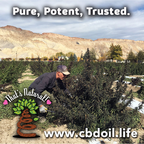 most trusted CBD brand, best-rated CBD, CBD for anxiety, CBD for sleep, That's Natural Entourage Effect - hat's Natural Topical Products, CBD Lotions, CBD Salves, Thats Natural full spectrum lotion - CBD Massage Oil, CBD cream, CBD creme, CBD muscle jelly, CBD salve, CBD face, CBD face and eye creme - hemp-derived CBD, legal in all 50 States at cbdoil.life and www.cbdoil.life