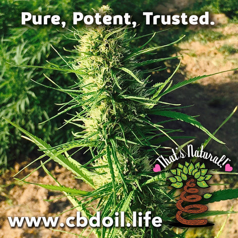 That's Natural CBDA Oil - Entourage Effect - That's Natural full spectrum CBD oil products with cannabinoids and terpenes - experience the entourage effect with Thats Natural CBD Oil, legal hemp CBD, hemp legal in all 50 States, CBD, CBDA, CBC, CBG, CBN, Cannabidiol, Cannabidiolic Acid, Cannabichromene, Cannabigerol, Cannabinol; beta-myrcene, linalool, d-limonene, alpha-pinene, humulene, beta-caryophyllene - find at cbdoil.life and www.cbdoil.life