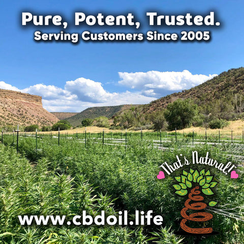 most trusted CBD, best-rated CBD, family-owned CBD company, legal hemp CBD, hemp legal in all 50 States, hemp-derived CBD, Thats Natural topical CBD products, CBDA, CBDA Oil, Life Force with biodynamic Colorado hemp - That's Natural CBD Oil from hemp - whole plant full spectrum cannabinoids and terpenes legal in all 50 States - www.cbdoil.life, cbdoil.life, www.thatsnatural.info, thatsnatural.info, CBD oil testimonials, hear from customers of CBD oil products