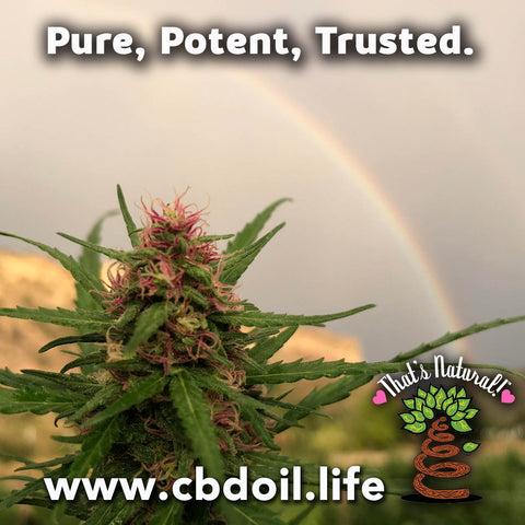 most trusted CBD, best-rated CBD, family-owned CBD company, CBDA oil, That's Natural, premium CBD products at cbdoil.life and www.cbdoil.life, aspen and basalt colorado www.thatsnatural.info