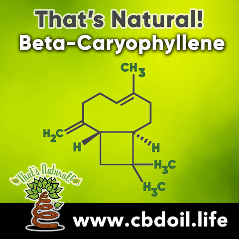 hemp-derived CBD, legal hemp CBD, The That's Natural terpene profile includes: beta-myrcene, linalool, d-limonene, alpha-pinene, humulene, beta-caryophyllene - more from Thats Natural at www.cbdoil.life, cbdoil.life, and www.thatsnatural.info and find us an our Life Force Market outside of Basalt, Colorado in the Aspen Valley next to the Willits Gas Station #ThatsNatural #lifeforce #cbd #cbdoil