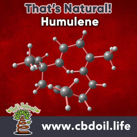 hemp-derived CBD, legal hemp CBD, The That's Natural terpene profile includes: beta-myrcene, linalool, d-limonene, alpha-pinene, humulene, beta-caryophyllene - more from Thats Natural at www.cbdoil.life, cbdoil.life, and www.thatsnatural.info and find us an our Life Force Market outside of Basalt, Colorado in the Aspen Valley next to the Willits Gas Station CBD Distillery, best-rated CBD, Alex Jones, Glenn Beck, CW Botanicals #ThatsNatural #lifeforce #cbd #cbdoil