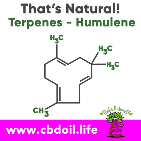The That's Natural terpene profile includes: beta-myrcene, linalool, d-limonene, alpha-pinene, humulene, beta-caryophyllene - more from Thats Natural at www.cbdoil.life and find us an our Life Force Market outside of Basalt in the Aspen Valley next to the Willits Gas Station #ThatsNatural #lifeforce #cbd #cbdoil