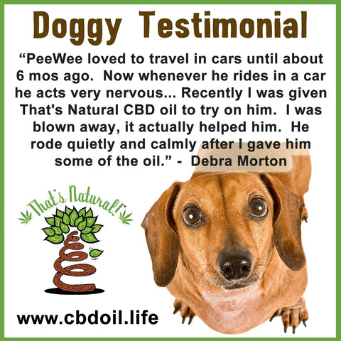 CBD for Dogs - CBD for anxiety in our furry friends - That's Natural CBD Oil at www.cbdoil.life