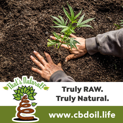 most trusted CBD, best-rated CBD - family-owned CBD company, legal hemp CBD, hemp legal in all 50 States, hemp-derived CBD, Thats Natural topical CBD products, CBDA, CBDA Oil, Life Force with biodynamic Colorado hemp - That's Natural CBD Oil from hemp - whole plant full spectrum cannabinoids and terpenes legal in all 50 States - www.cbdoil.life, cbdoil.life, www.thatsnatural.info, thatsnatural.info, CBD oil testimonials, hear from customers of CBD oil products