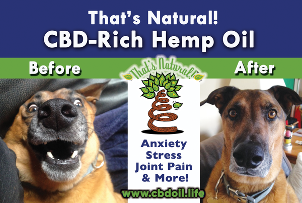 CBD for Pets - Is CBD safe for Pets?  Full spectrum CBD-rich hemp oil from That's Natural at www.cbdoil.life
