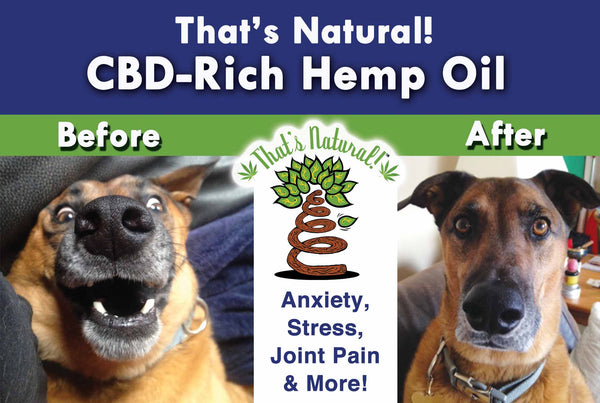 CBD for Pets?  Absolutely!  Our canine and feline friends have an Endocannabinoid System as well!  Try our That's Natural full spectrum CBD-rich hemp oil – we are a premium product with complete transparency and traceability!  See more at www.cbdoil.life  @cbdhempoil  and find us in the #Aspen Valley right outside of #Basalt at our That's Natural Life Force Market! @thatsnatural  #petstagram #petfood #naturalpet #naturalpetfood #naturalpetcare #essentialoils #dogs #canines #caninesofaustin cbdhempoil  #dogstagram #dogsofinsta #dogsoftwitter #animals #animalsaddict #petsagram #dogslife #catslife #holistic #wellness