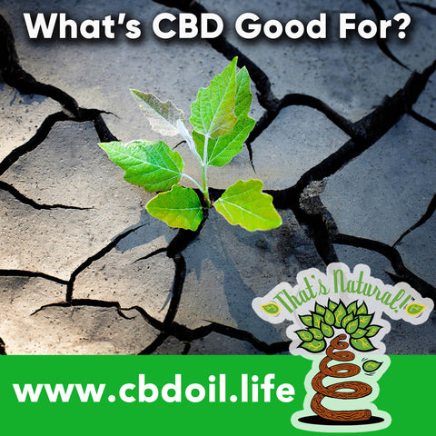What is CBD good for?  There's so many things, and many of them relate to the Endocannabinoid System!  This article is about CBD for #seizures #alzheimers #pain #cancer #anxiety #PTSD and Substance Abuse.  See more at www.cbdoil.life and @