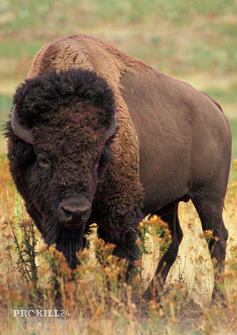 Group 1 American Bison