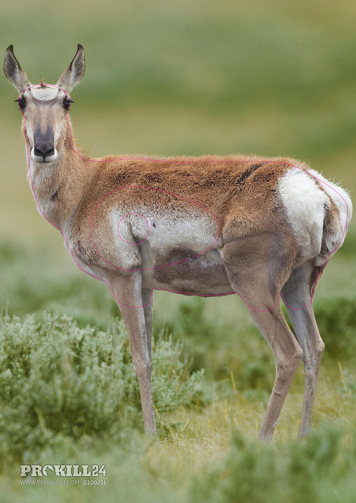 Left facing Pronghorn Target Face. Yathin S Krishnappa / CC BY-SA 3.0