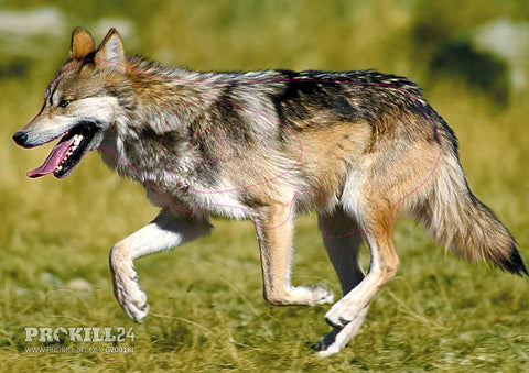 Group 2 Mexican Wolf