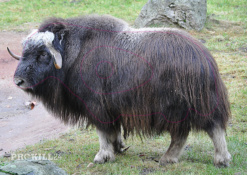 Left facing Muskox All Weather Target Face. Quartl / CC BY-SA 3.0