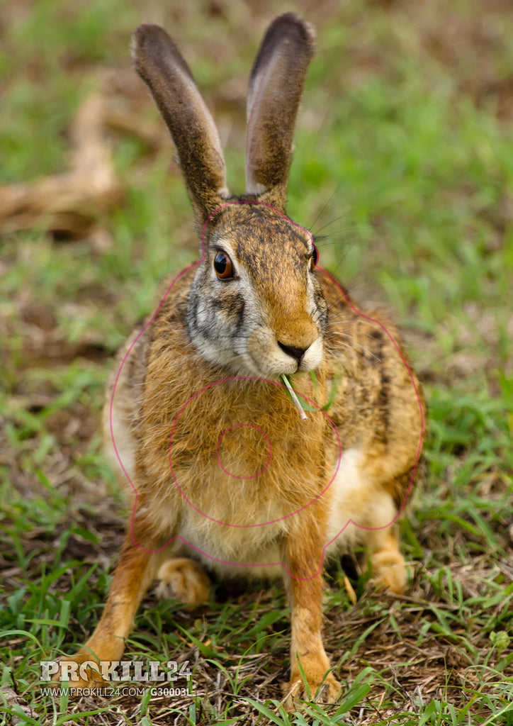 Left facing Black Naped Hare Target Face. Sumeet Moghe / CC BY-SA 3.0