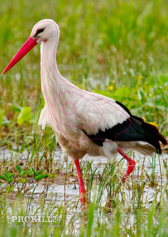 Group 3 White Stork