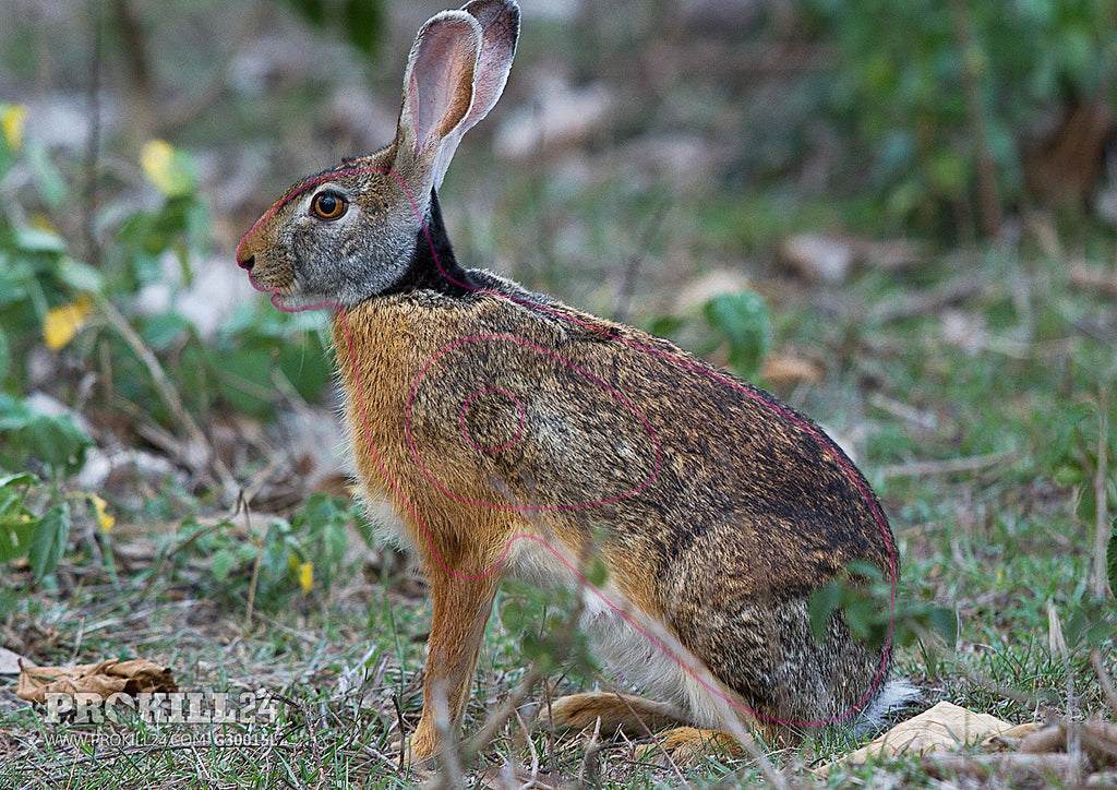 Left facing Indian Hare Target Face. N. A. Naseer / CC BY-SA 2.5 in