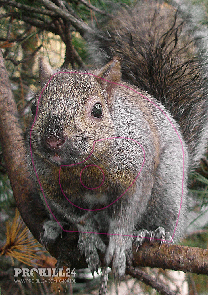 Summer coloured left facing Gray Squirrel Target Face. Quinet / CC BY 2.0