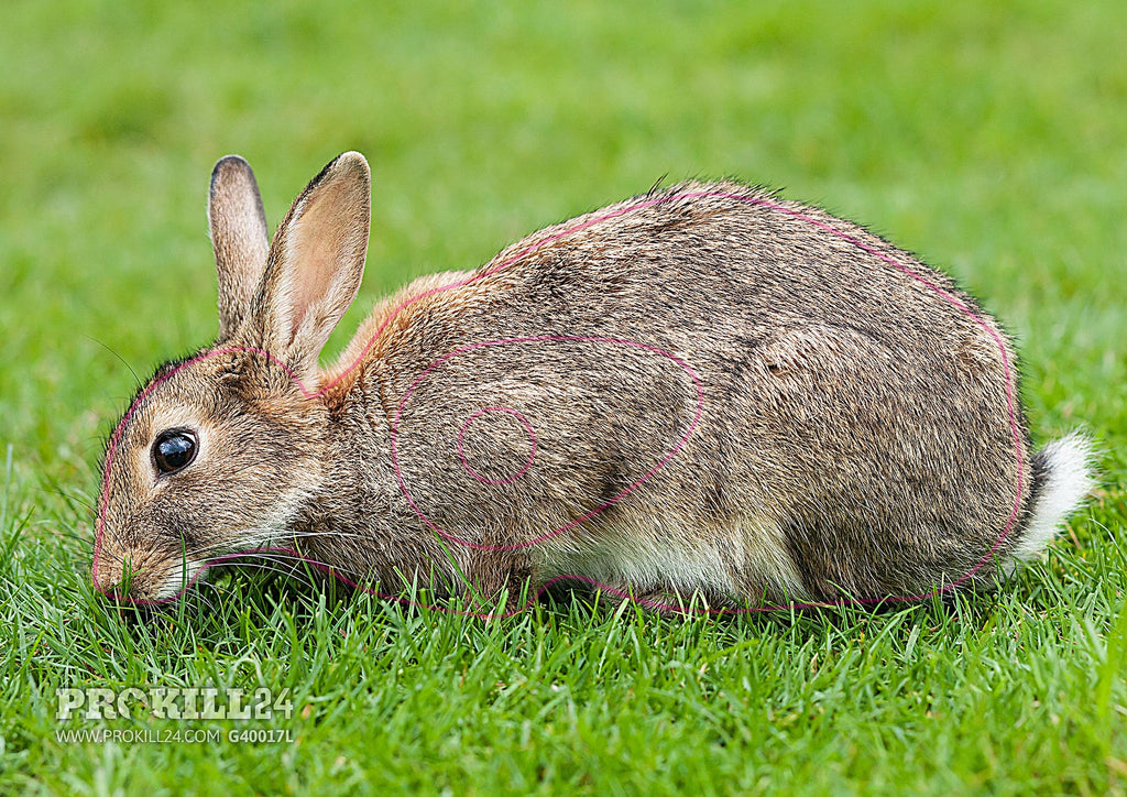 Left facing European Rabbit Target Face. Diliff / CC BY-SA 3.0