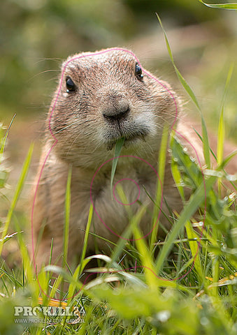 Group 4 Prairie Dog