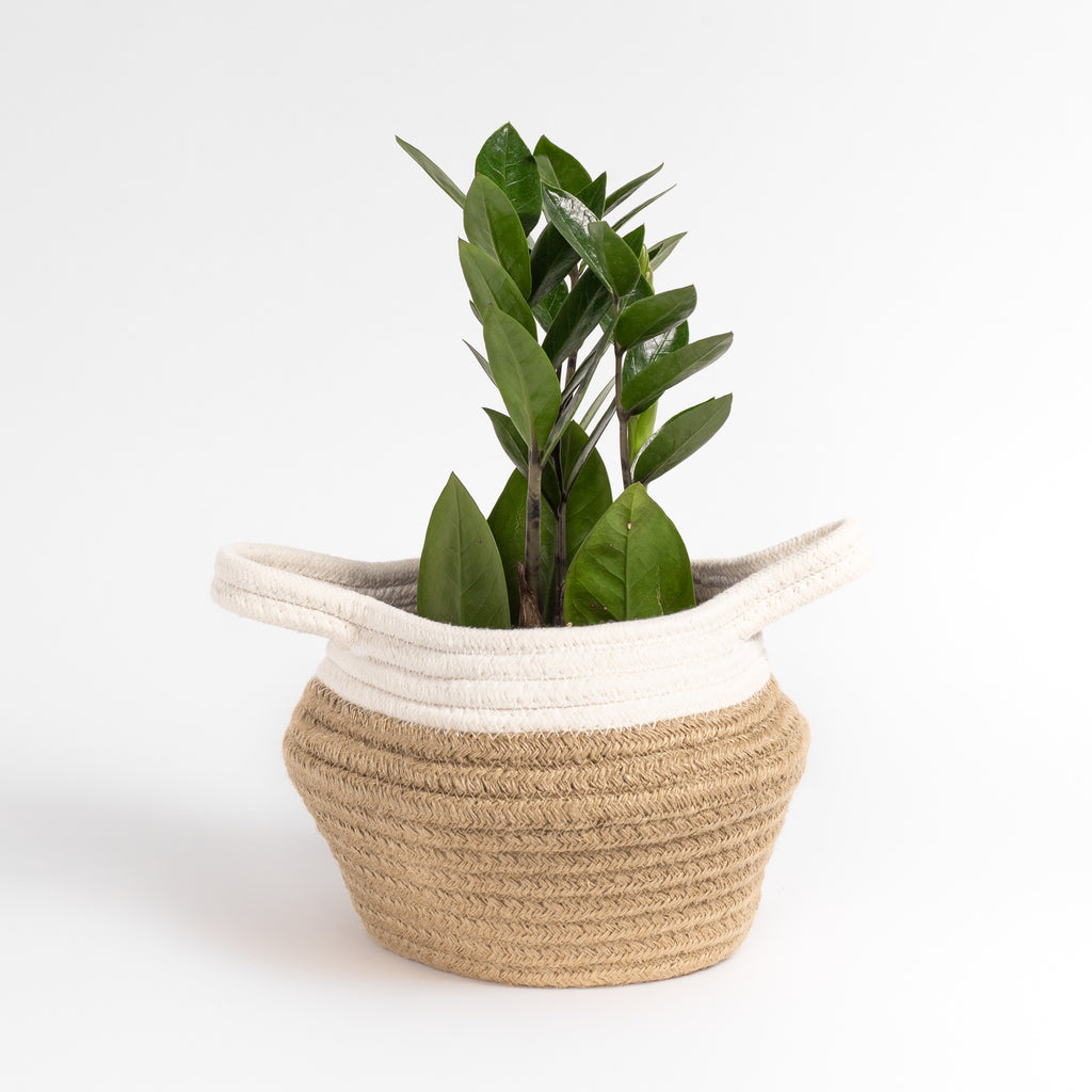 Bisu cream and natural cotton jute basket from Tonic Living