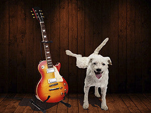 white shaggy dog peeing on Gibson Les Paul on guitar stand.