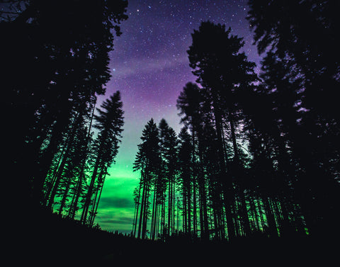 "gosko photo ""Aurora trees"""