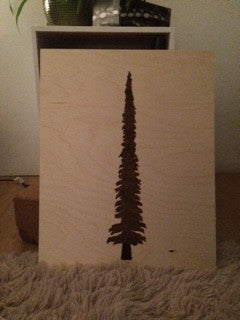 "Krista Dutton "" Subalpine Fir"""