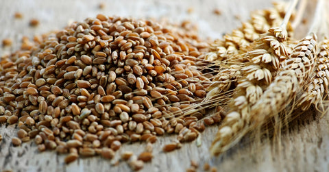hard wheat where to buy