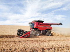 harvesting Palouse wheat berries
